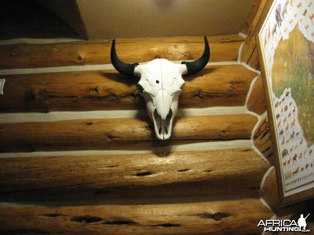 nice skull mount