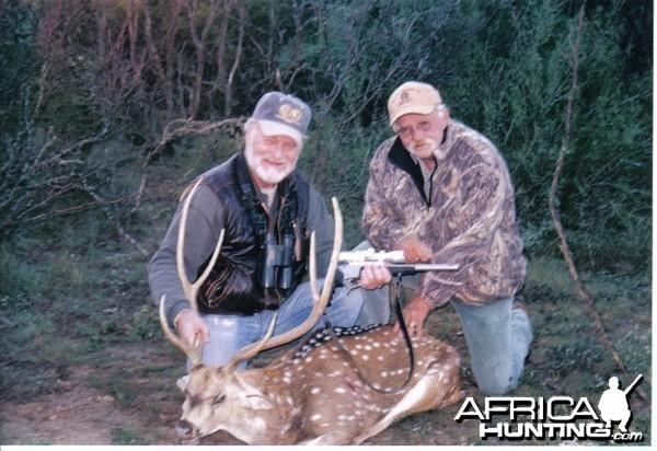 nice axis deer