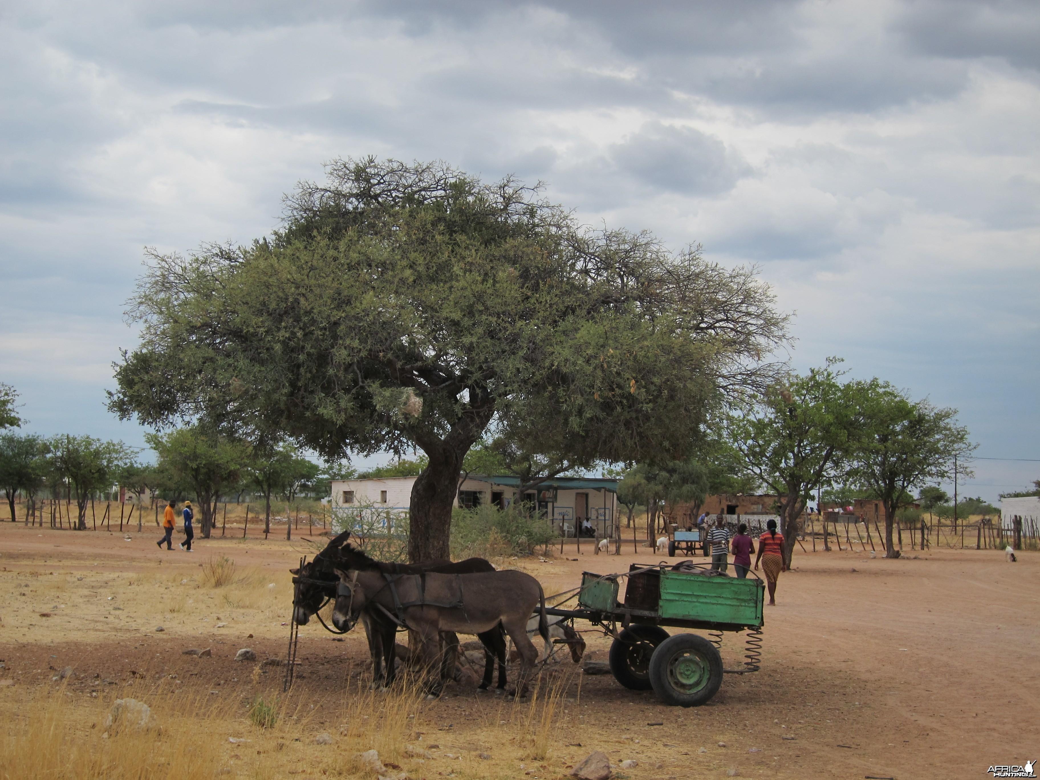 Donkey Cart Damaraland Namibia