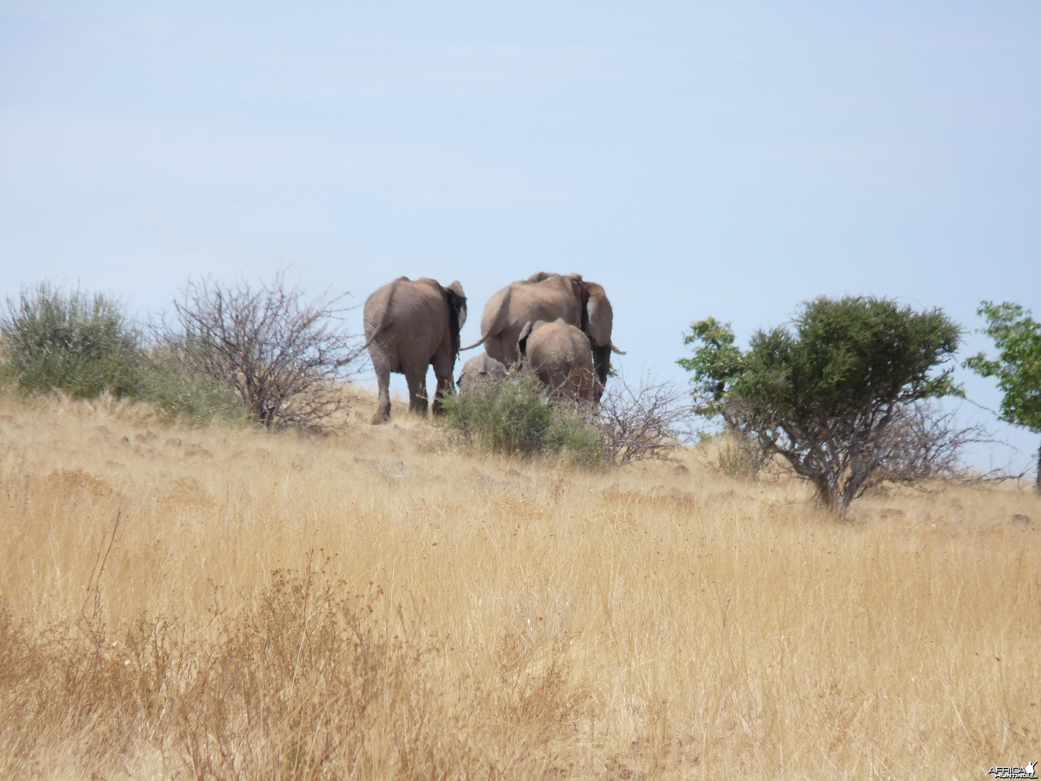 Elephant Damaraland Namibia
