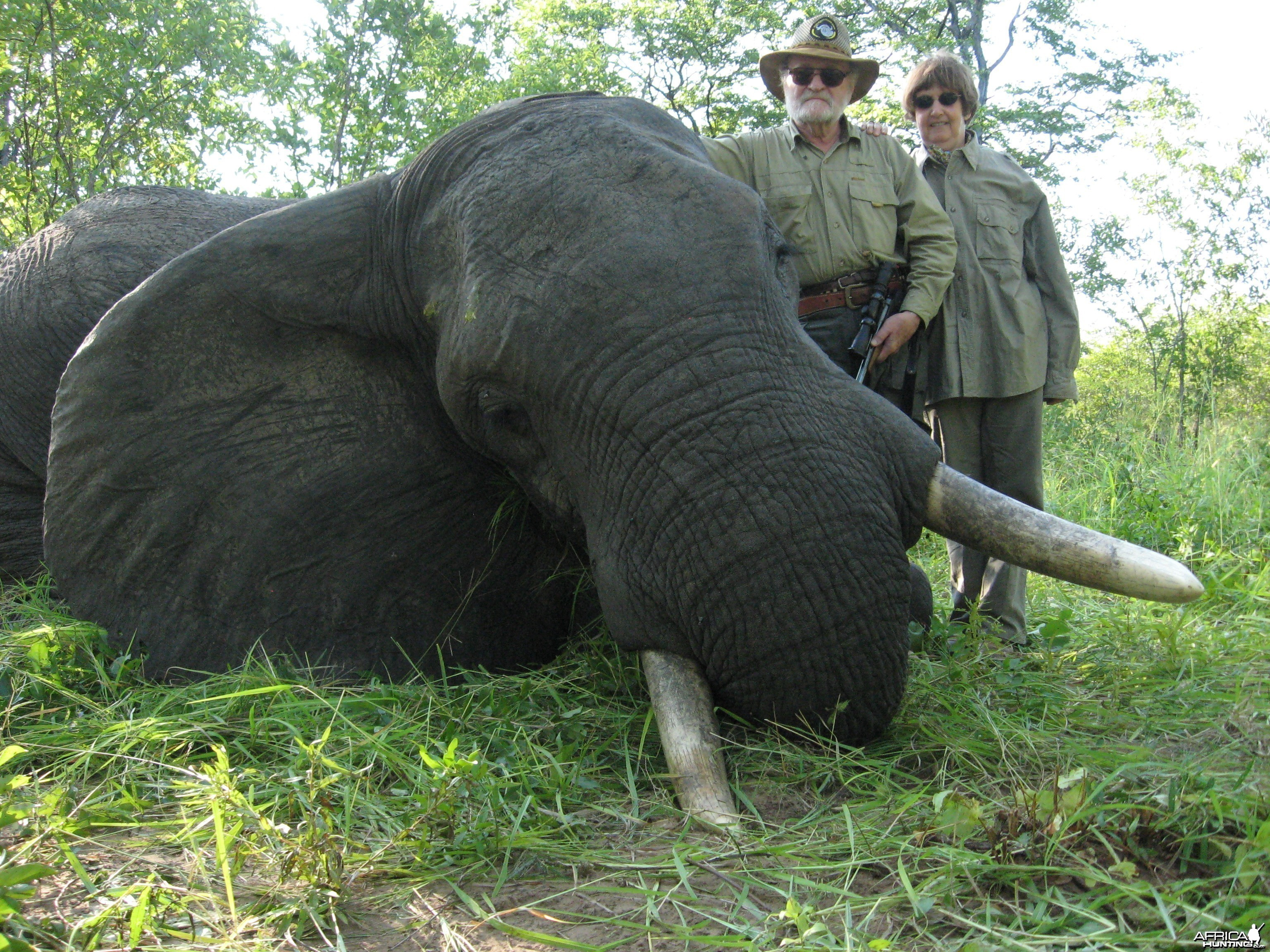 bull elephant with handgun