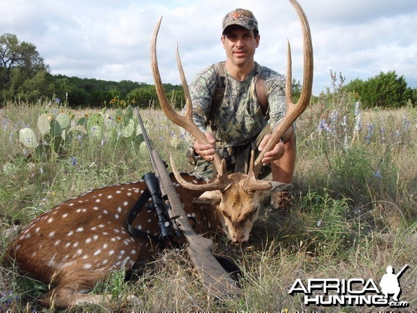 Free Range Axis Deer TX