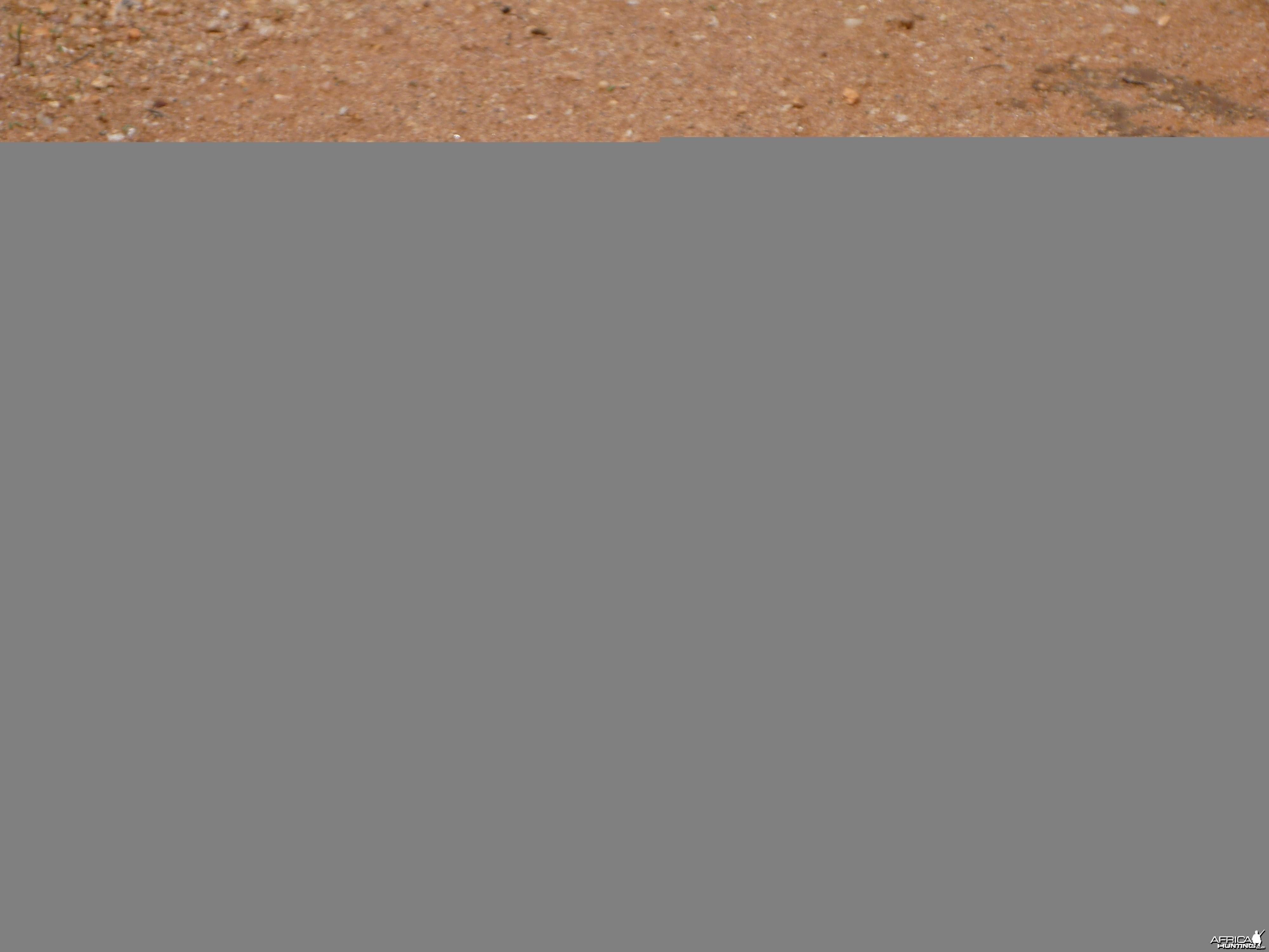 Grasshopper Namibia