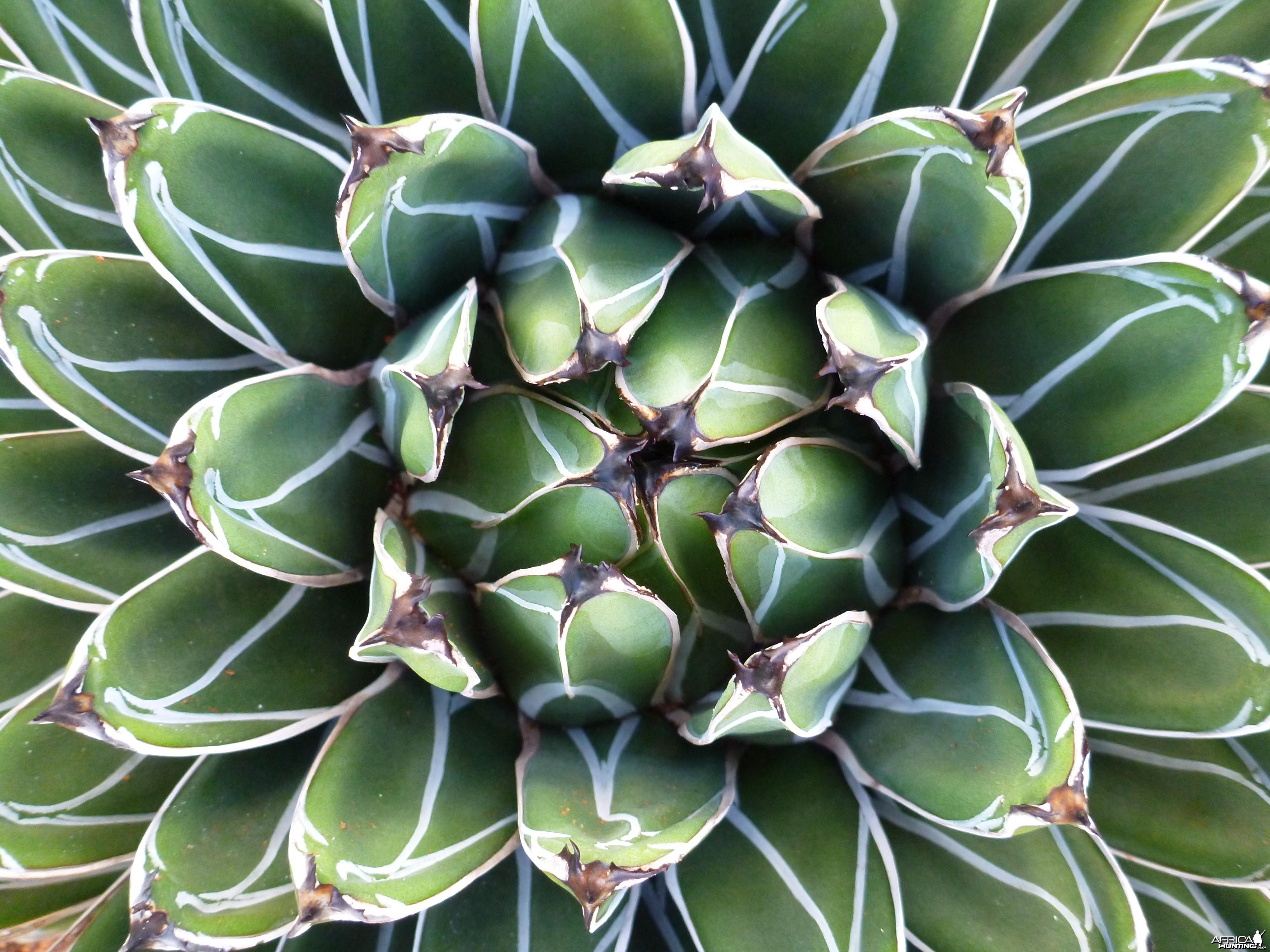 Cactus Namibia