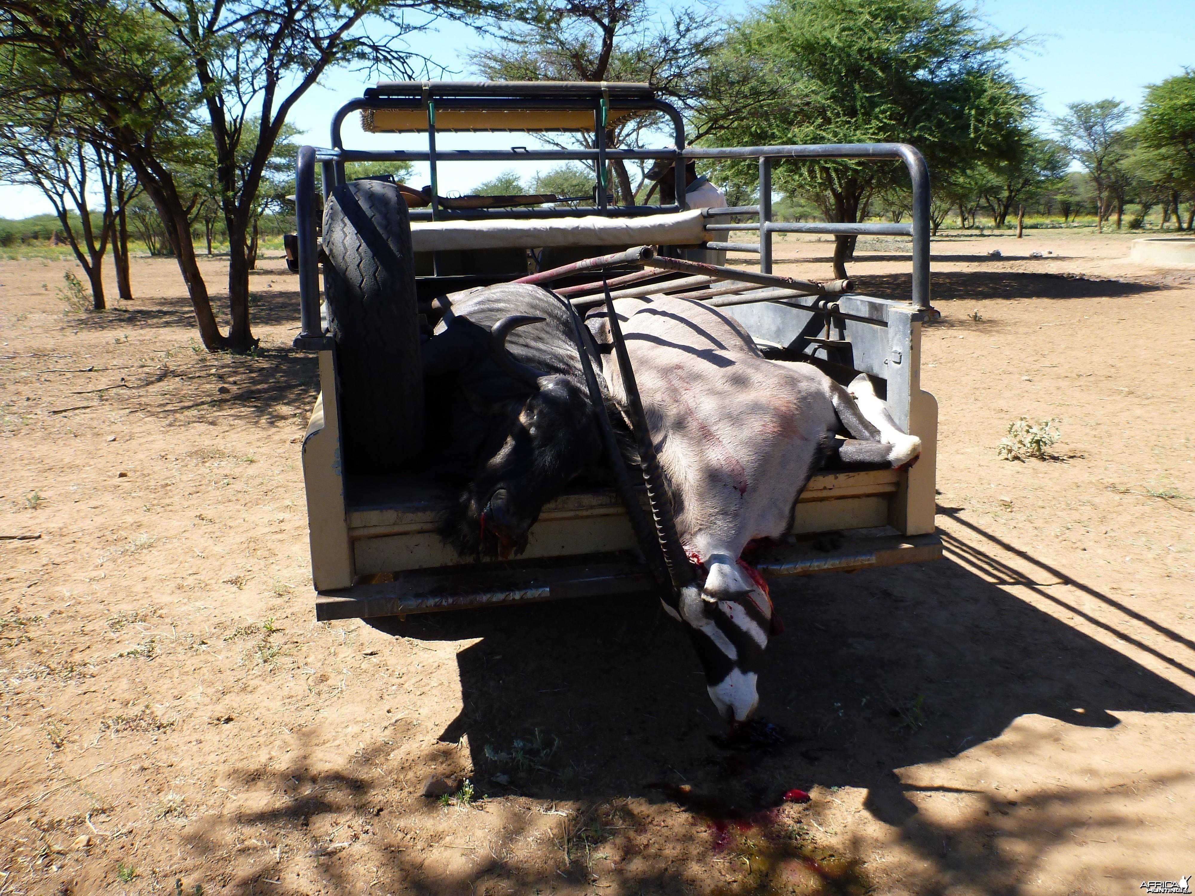 Cull Namibia