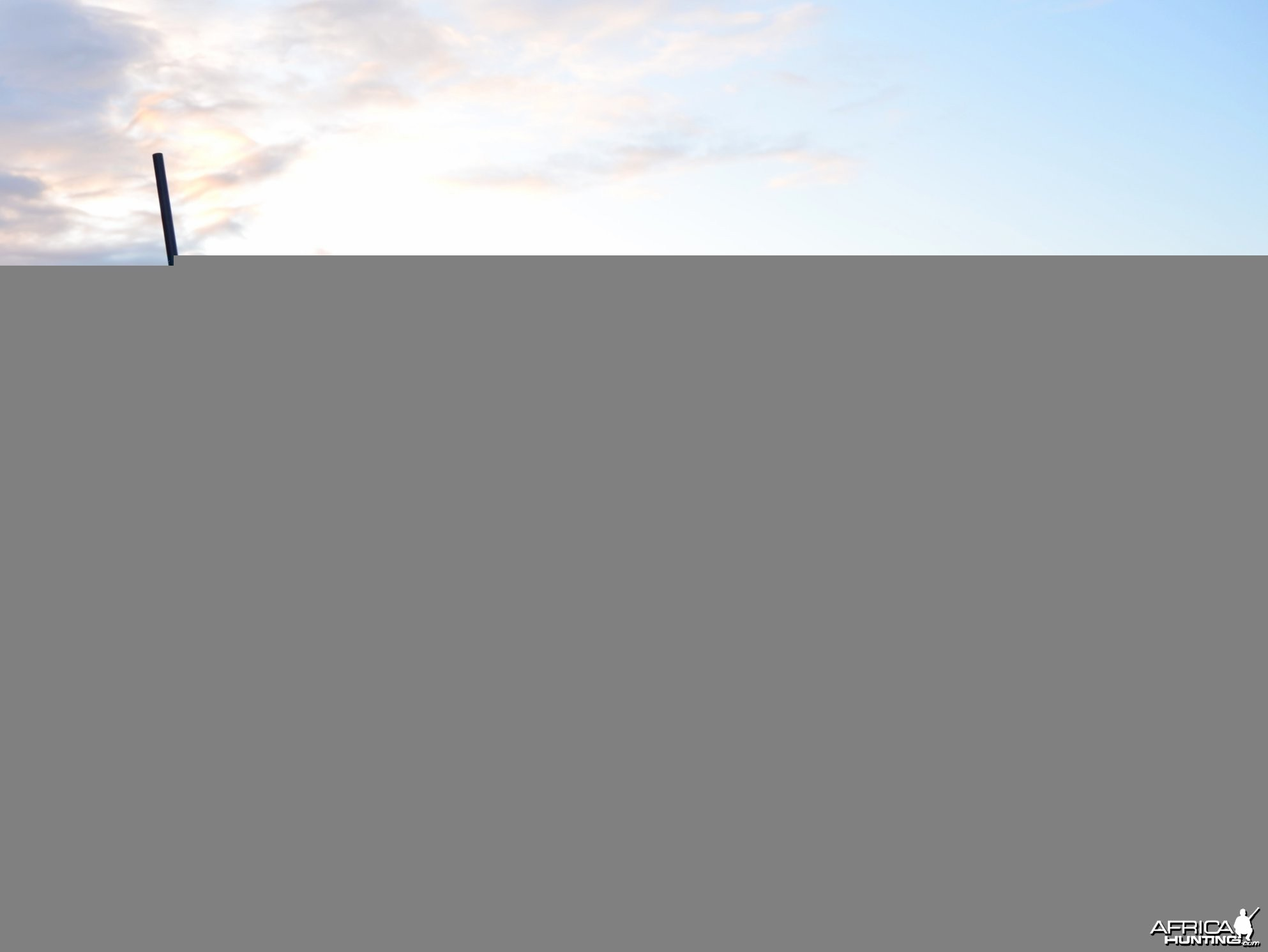 Scimitar Horned Oryx - Hunter Texas 2012