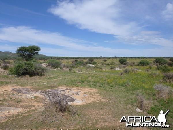 Cheetah scat rocks Namibia