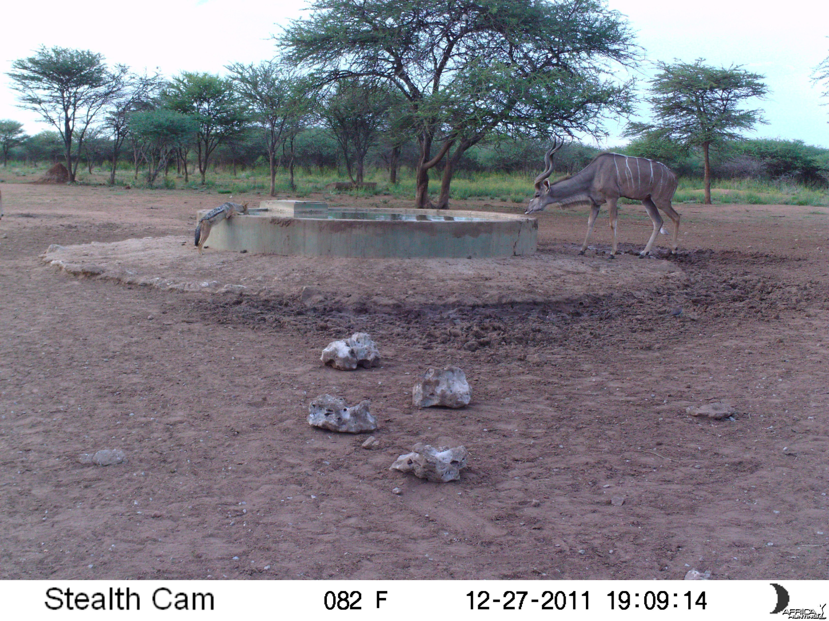 Greater Kudu Trail Camera Namibia