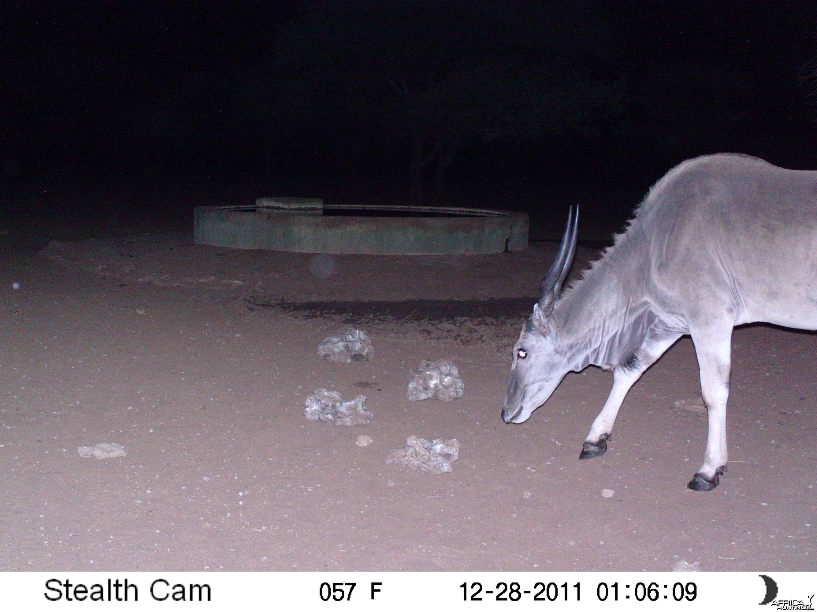 Eland Trail Camera Namibia