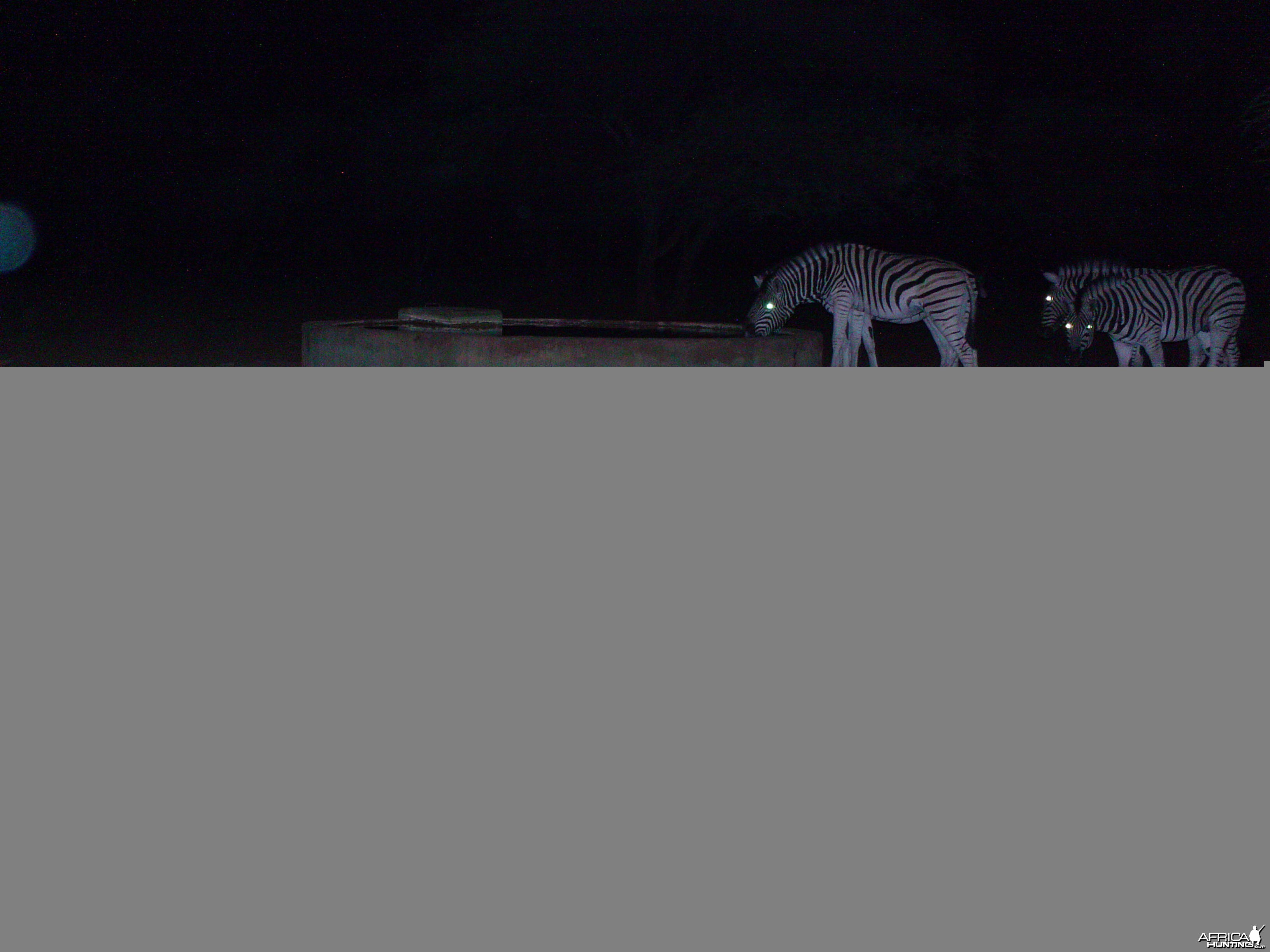 Zebra Trail Camera Namibia