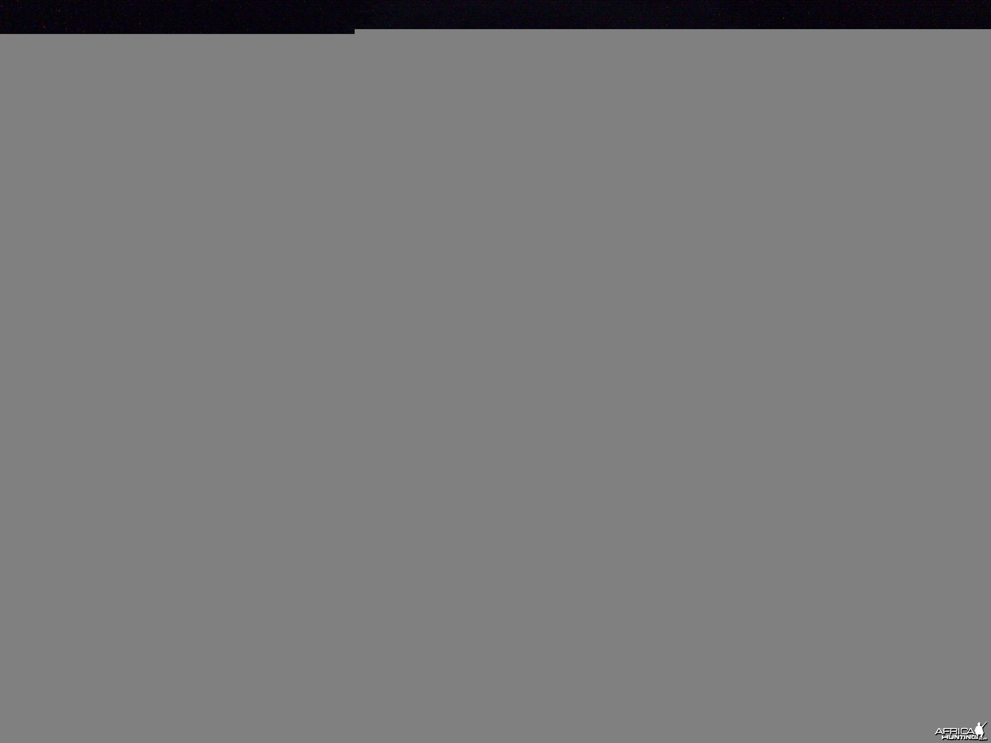 Zebra Trail Camera Namibia