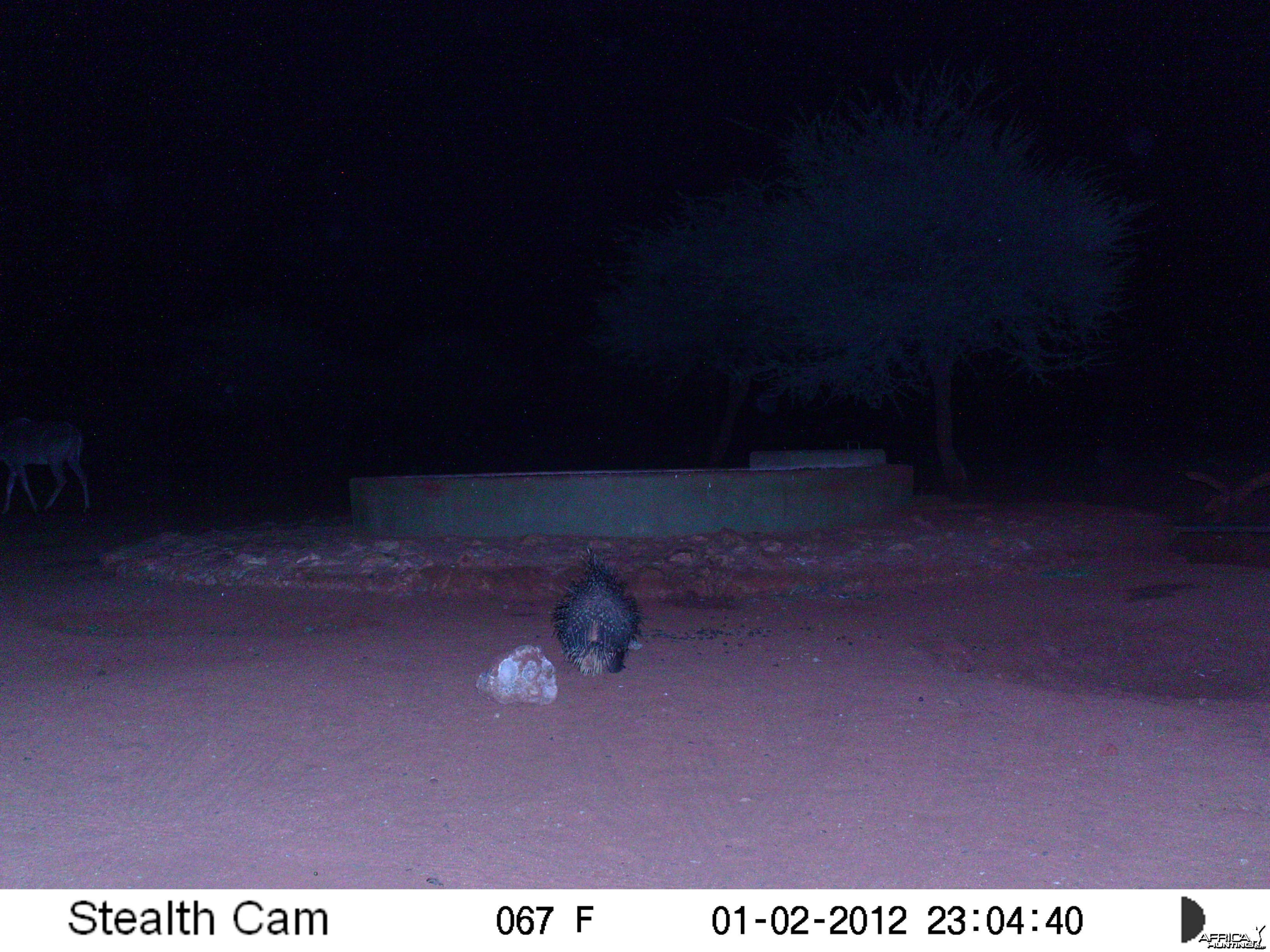 Porcupine Trail Camera Namibia