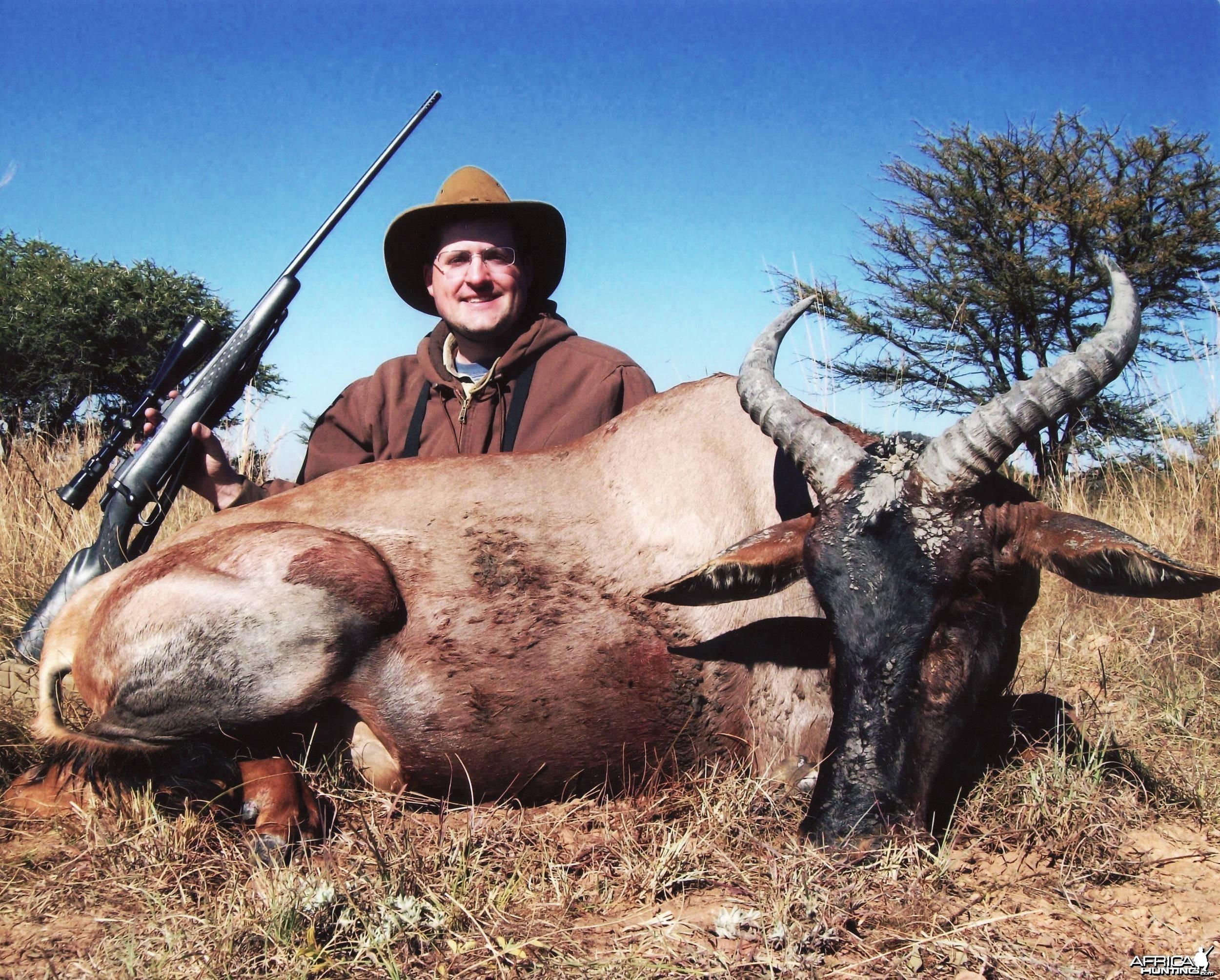 Tsessebe (14.5  inchs) Mhimbi Safari