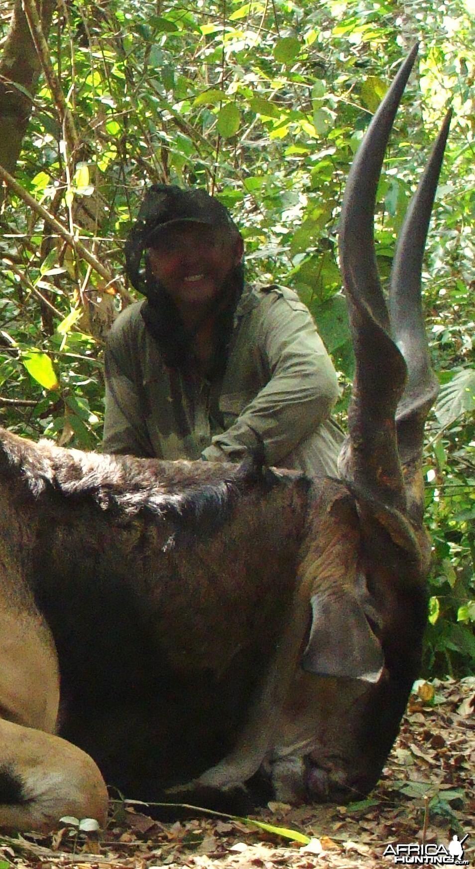 50 inch lord derby eland