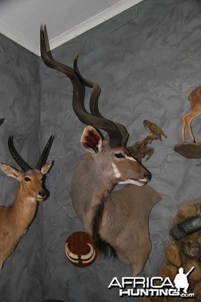 Kudu Wall Pedestal