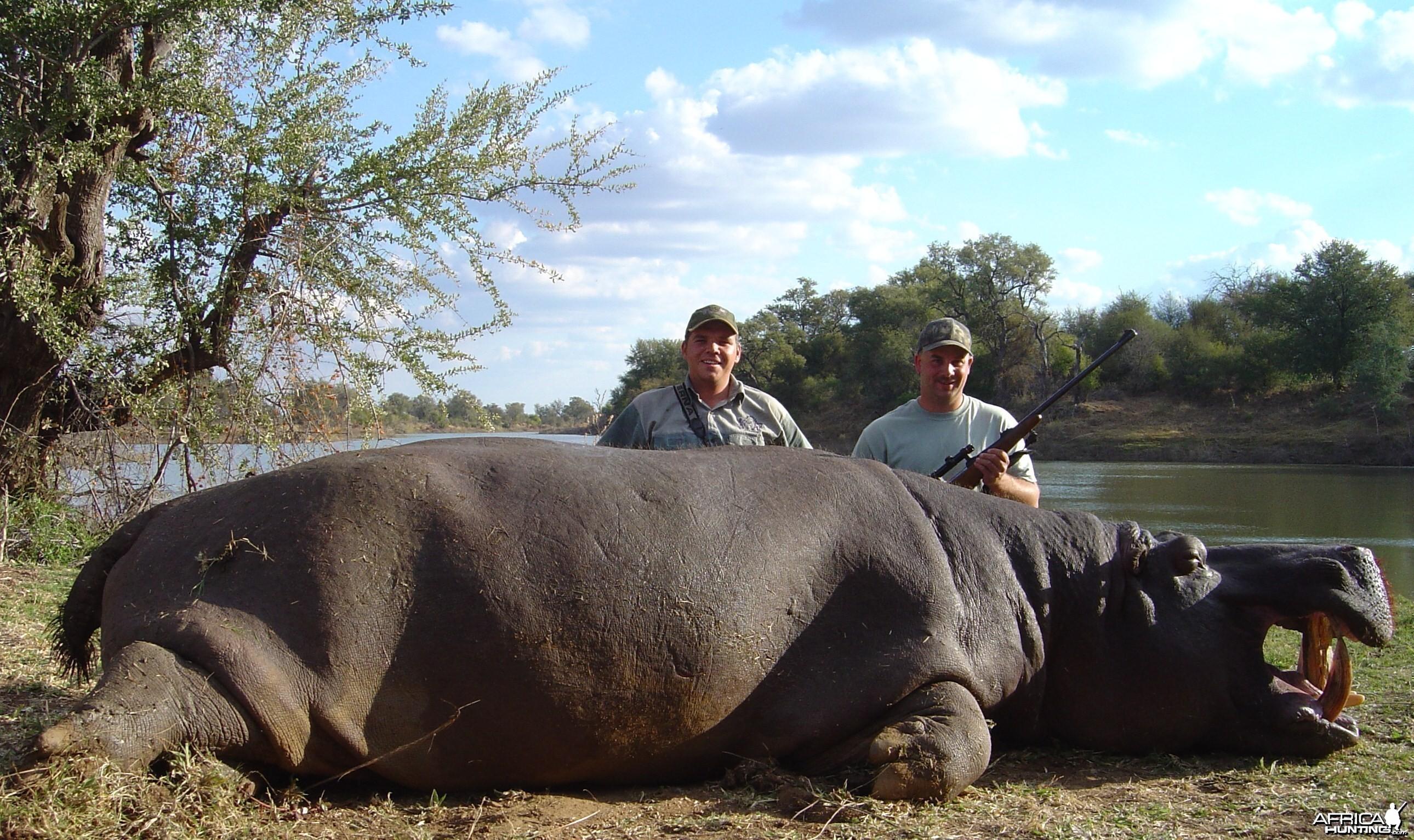Nice Hippo