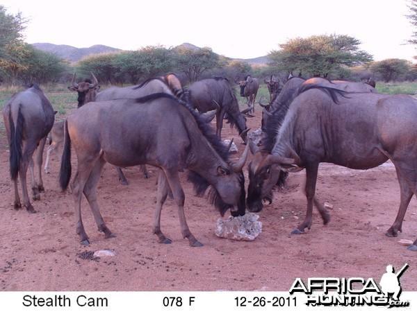 Trail Camera Namibia