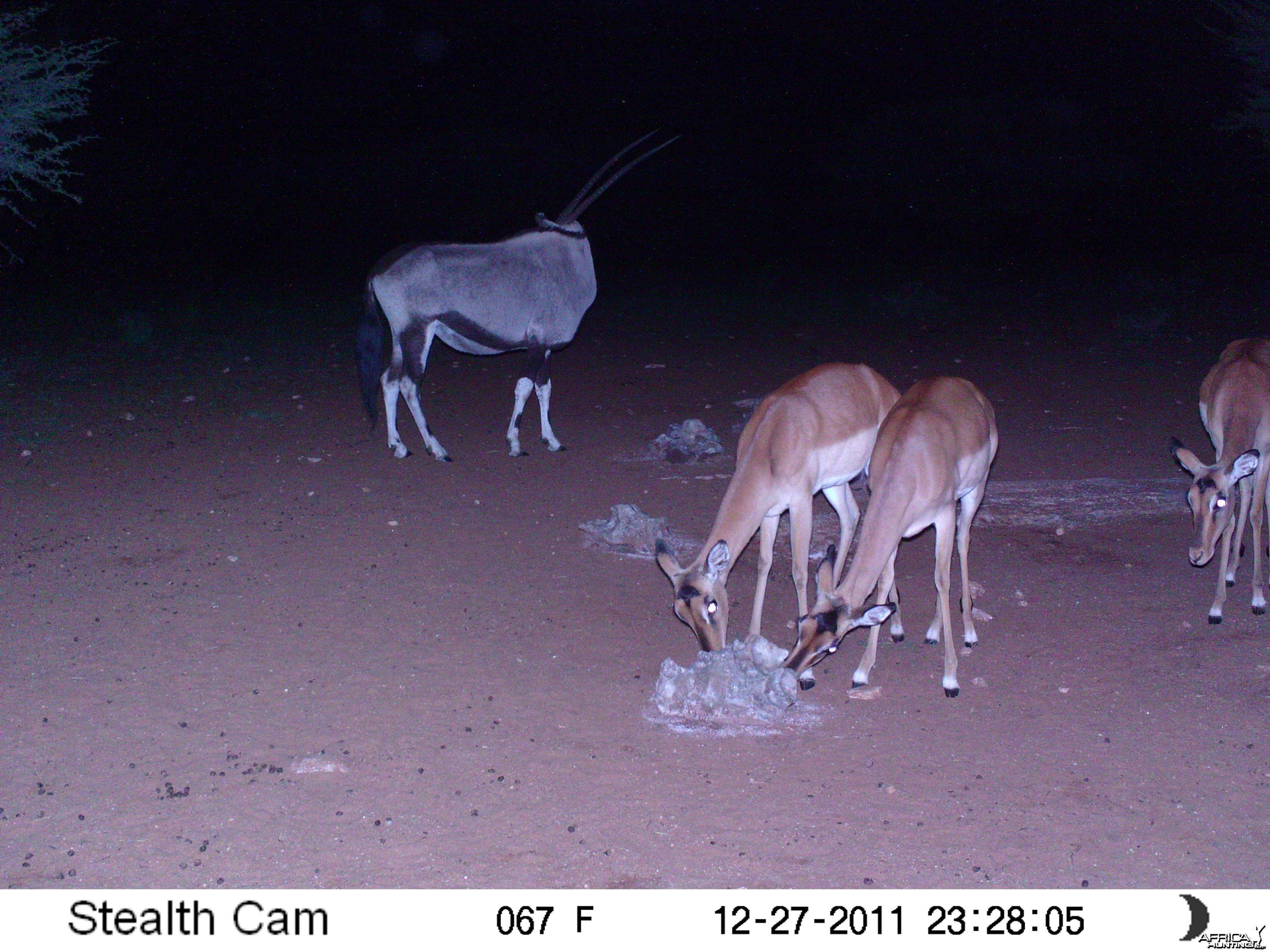 Trail Camera Namibia