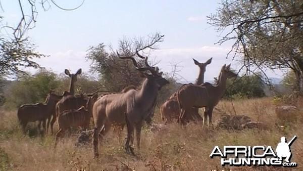 Kudu on alert