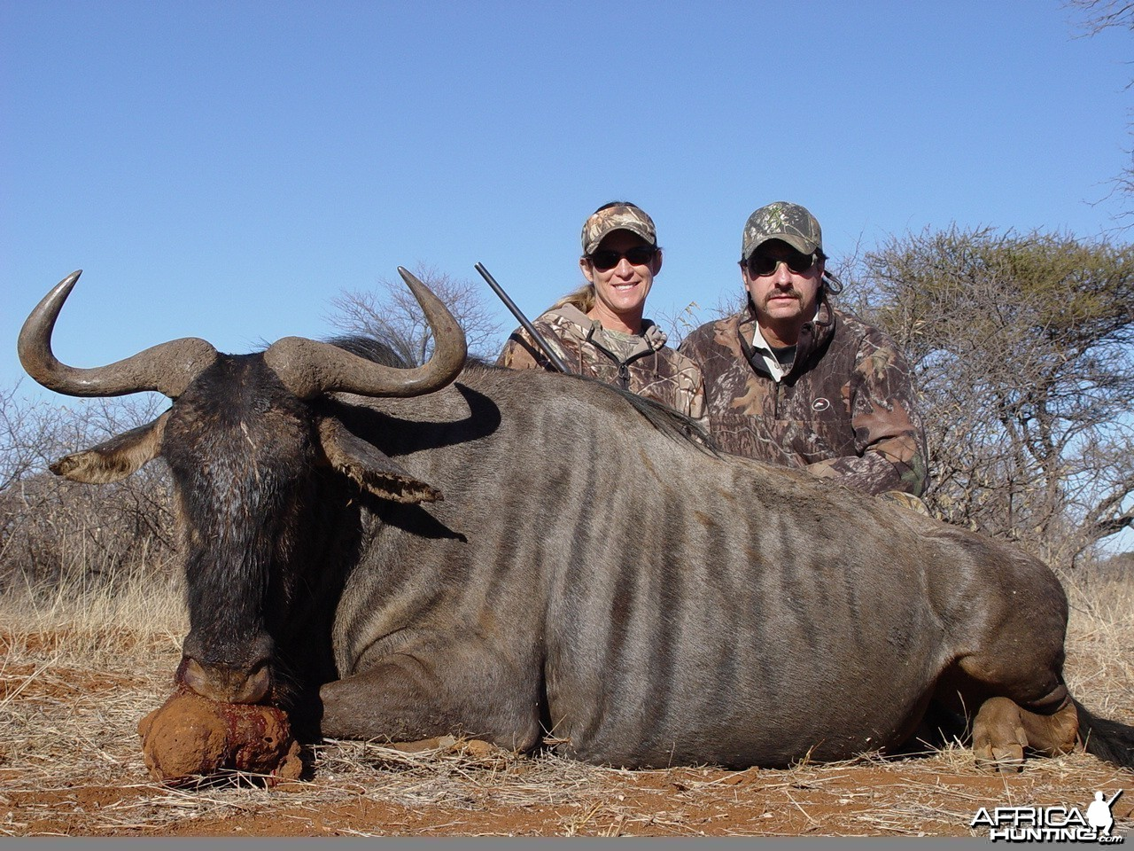 Lisa's Blue Wildebeest with Limcroma Safaris 2009