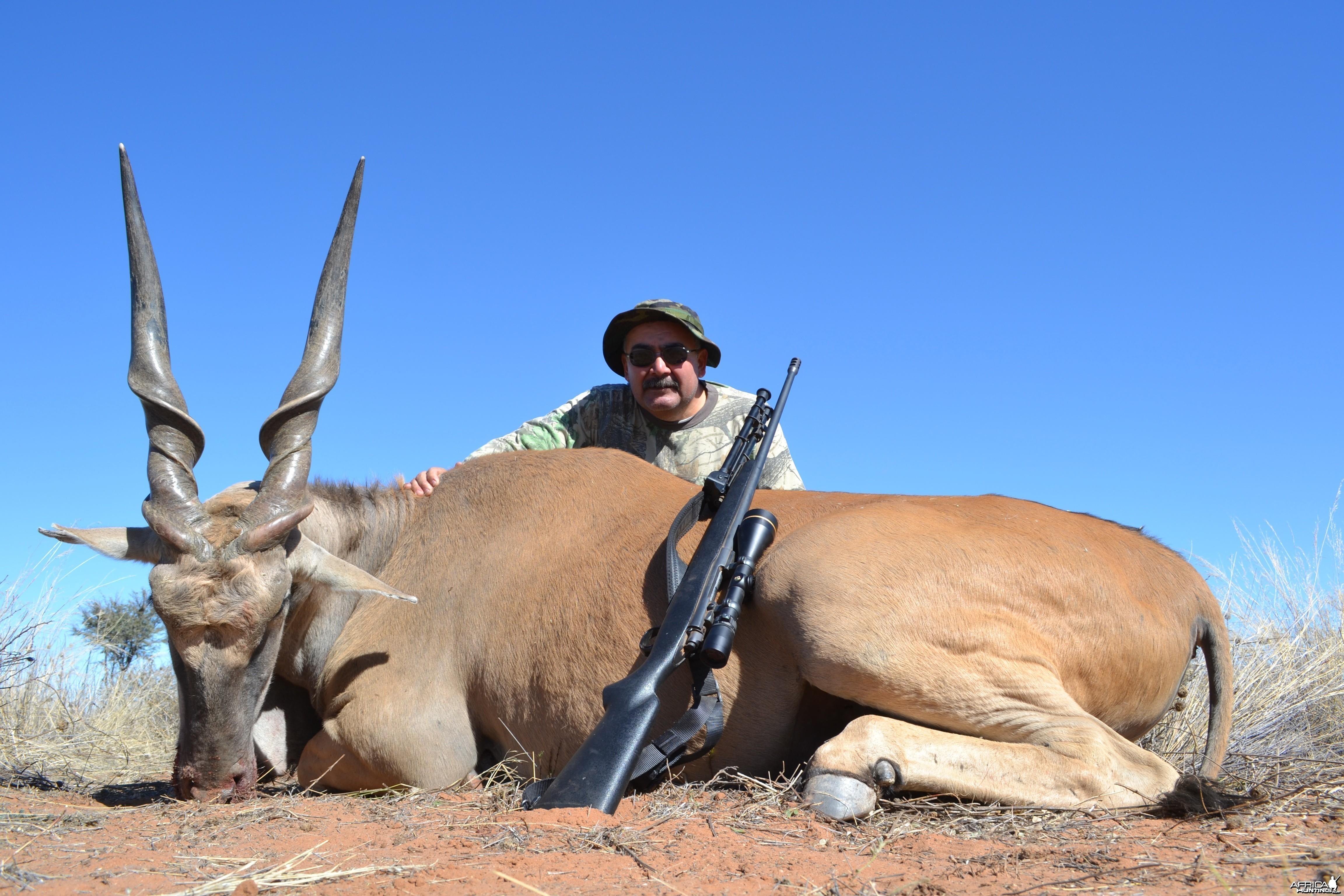 42 inch Eland bull