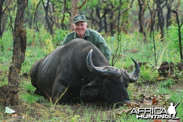 Central African Savannah Buffalo shot at CAWA-Safari