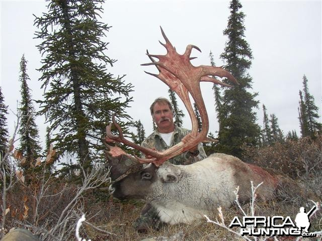 Central Canada Barren Ground Caribou