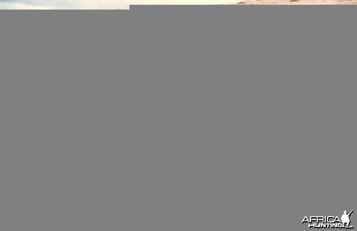 Patrick - Black Springbok 1996