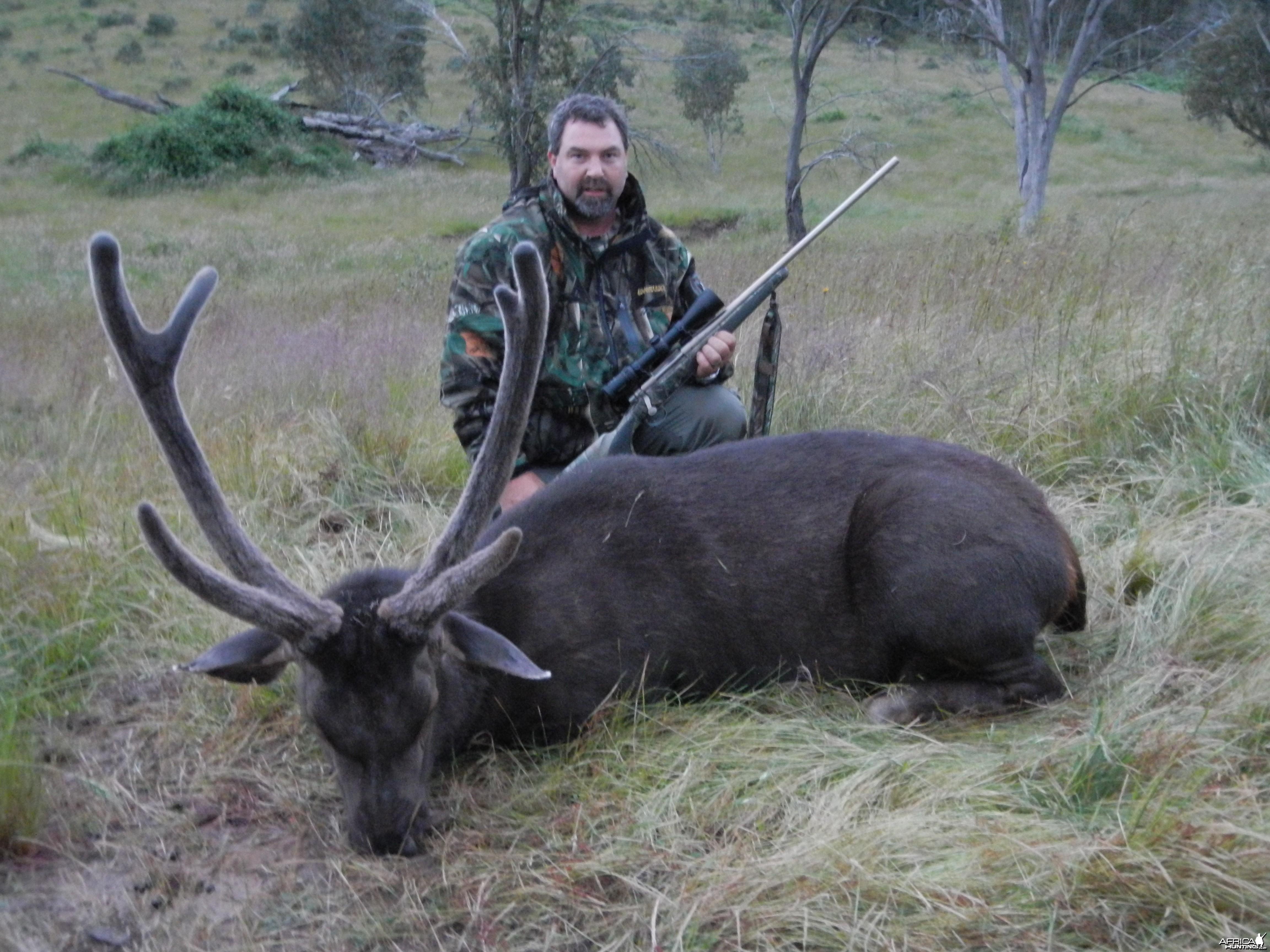 Sambar Deer - Australia