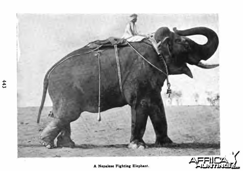 Nepalese Fighting Elephant