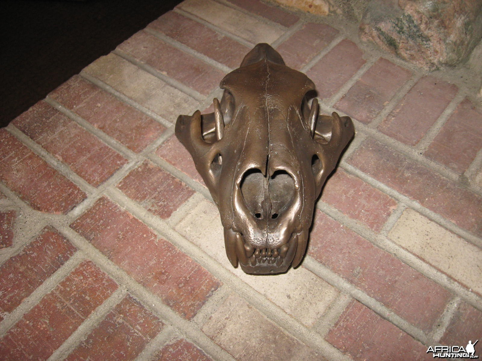 different angle of skull,pic's dont do it justice