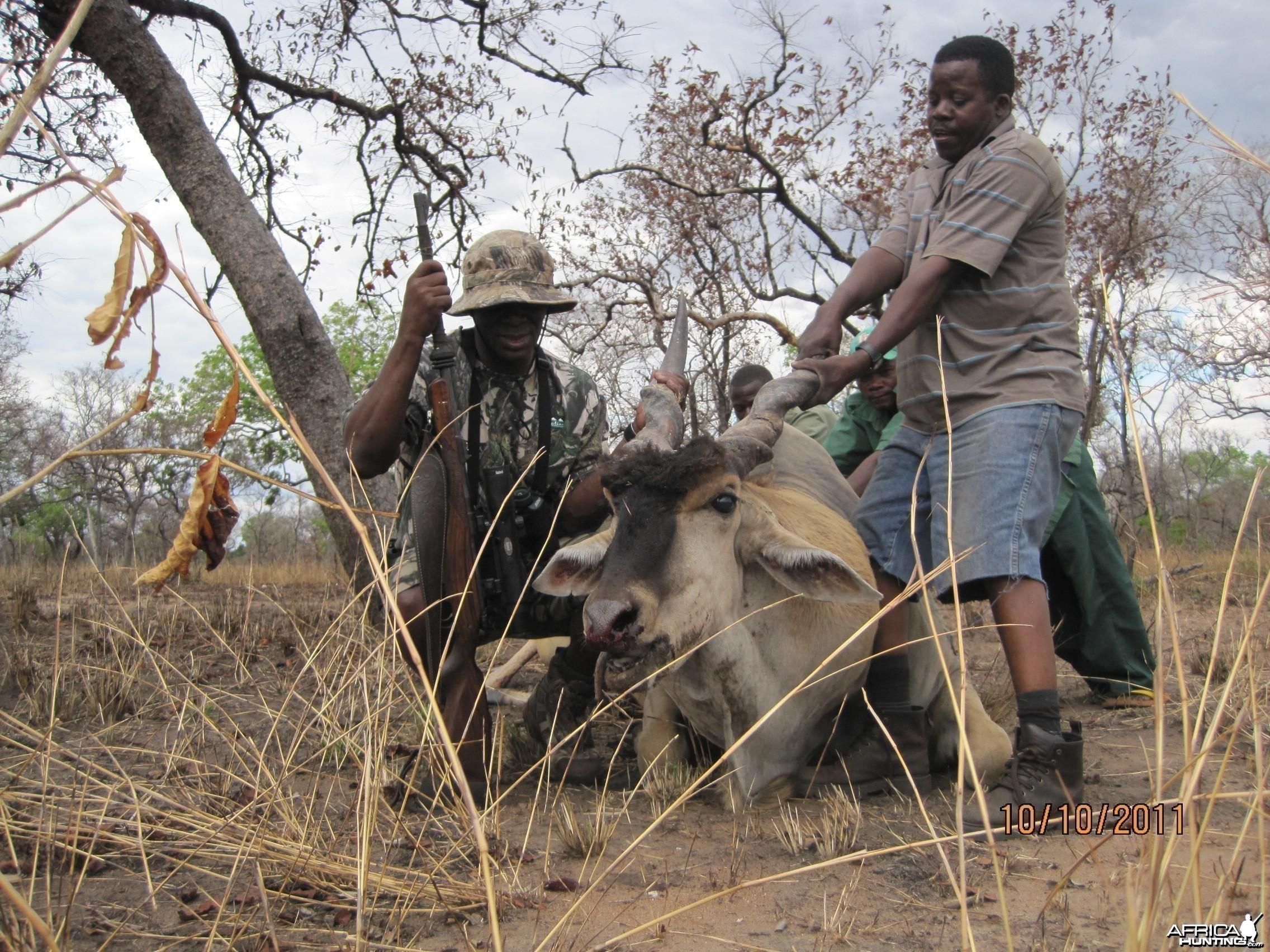 Hunting eland in Tanzania - Liwale