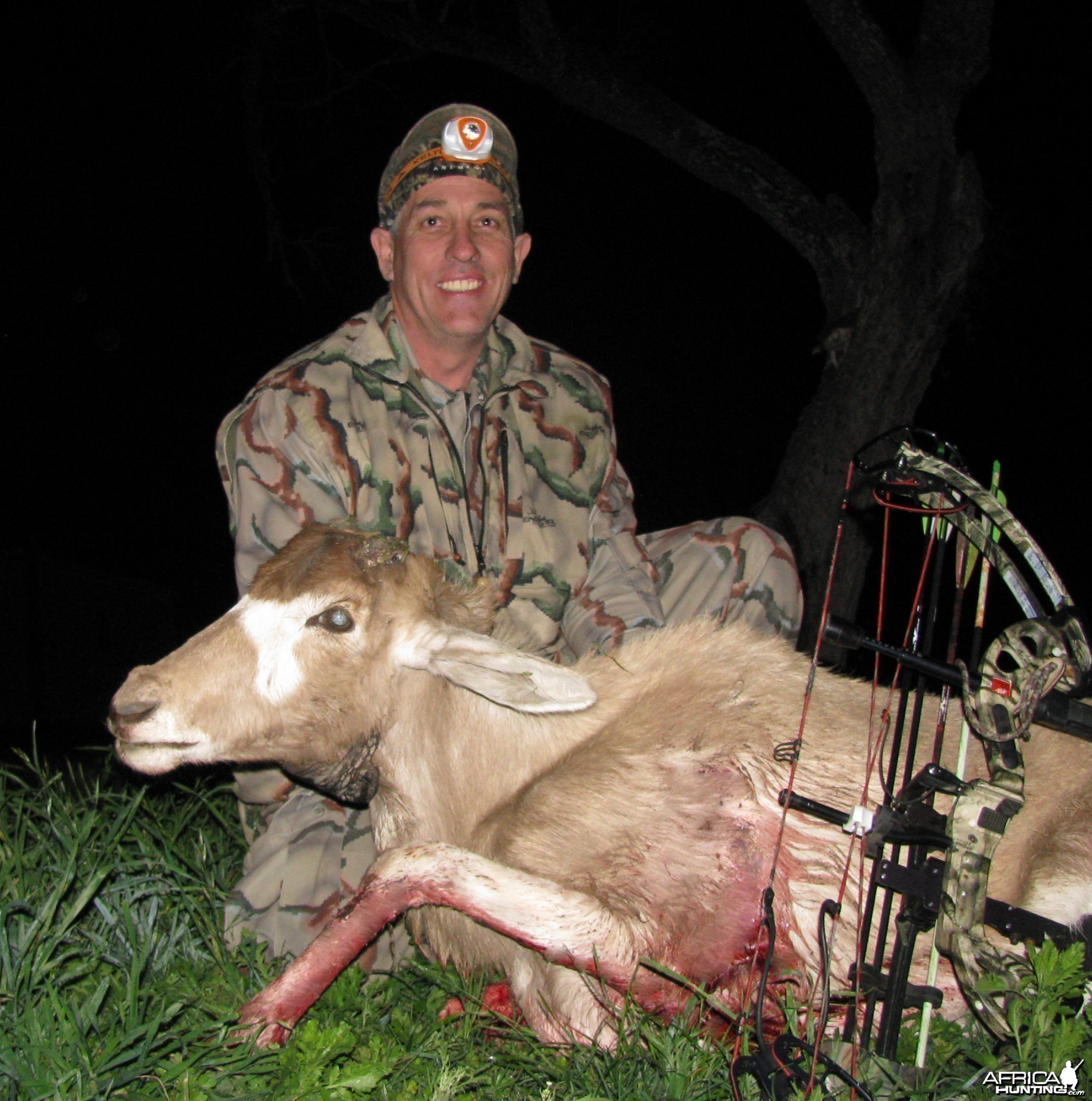 Addax in Texas