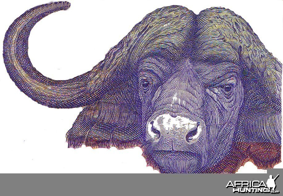 Buffalo on 100 Rand RSA note