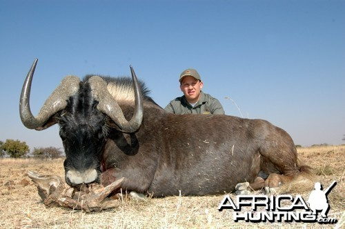 Motsomi Safaris - Black wildebeest