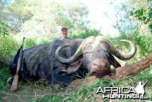 Motsomi Safaris - Cape Buffalo