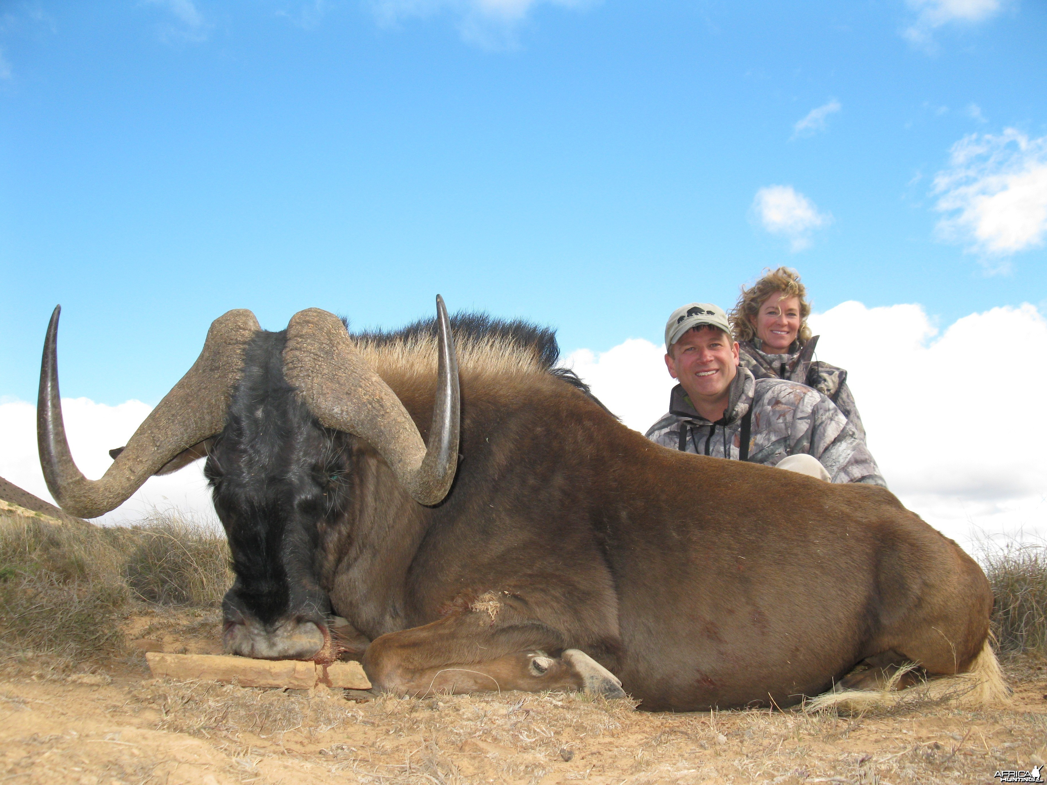 Black Wildebeest hunted with Andrew Harvey Safaris