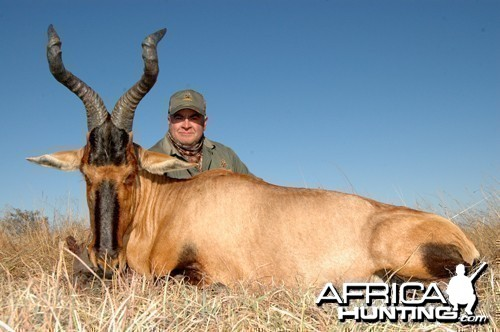 Motsomi Safaris - Red Hartebeest