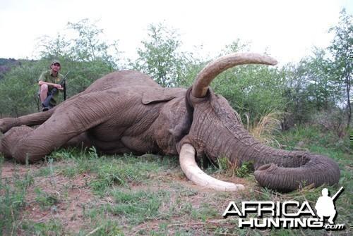 Motsomi Safaris - Elephant