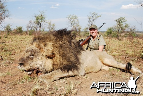 Motsomi Safaris - Lion
