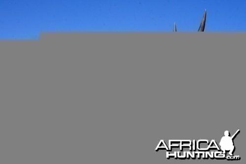 Motsomi Safaris - Eland