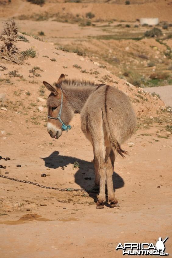 Donkey Africa