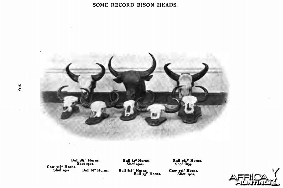 record bison heads