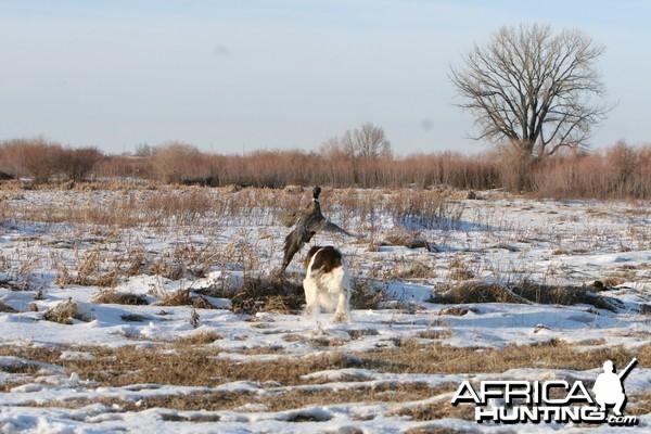 My hunting dog