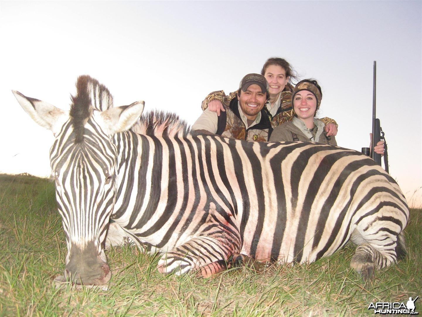 Burchell Zebra hunted with Andrew Harvey Safaris