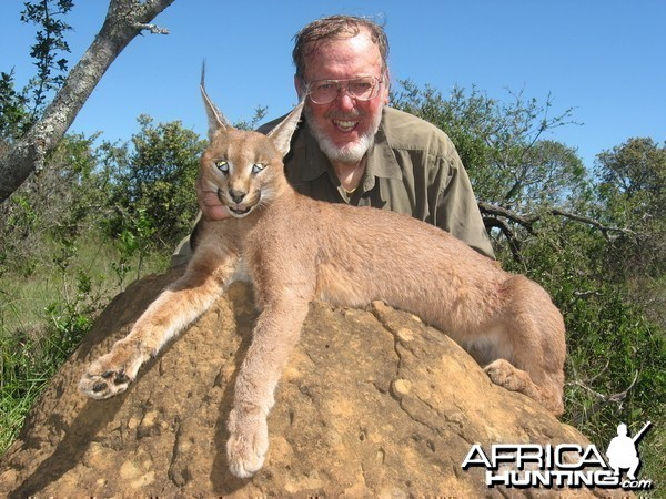 Cape Lynx hunted with Andrew Harvey Safaris