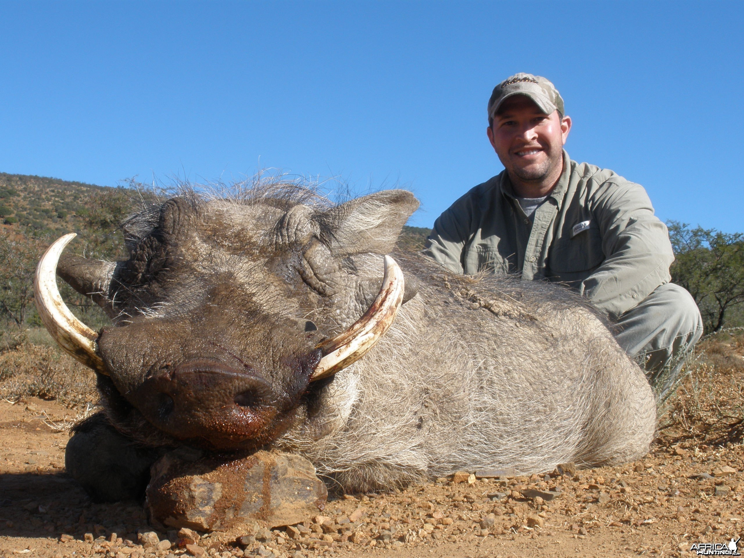 Warthog hunted with Andrew Harvey Safaris