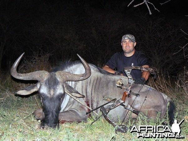 Blue Wildebeest bowhunted at Ozondjahe Hunting Safaris Namibia