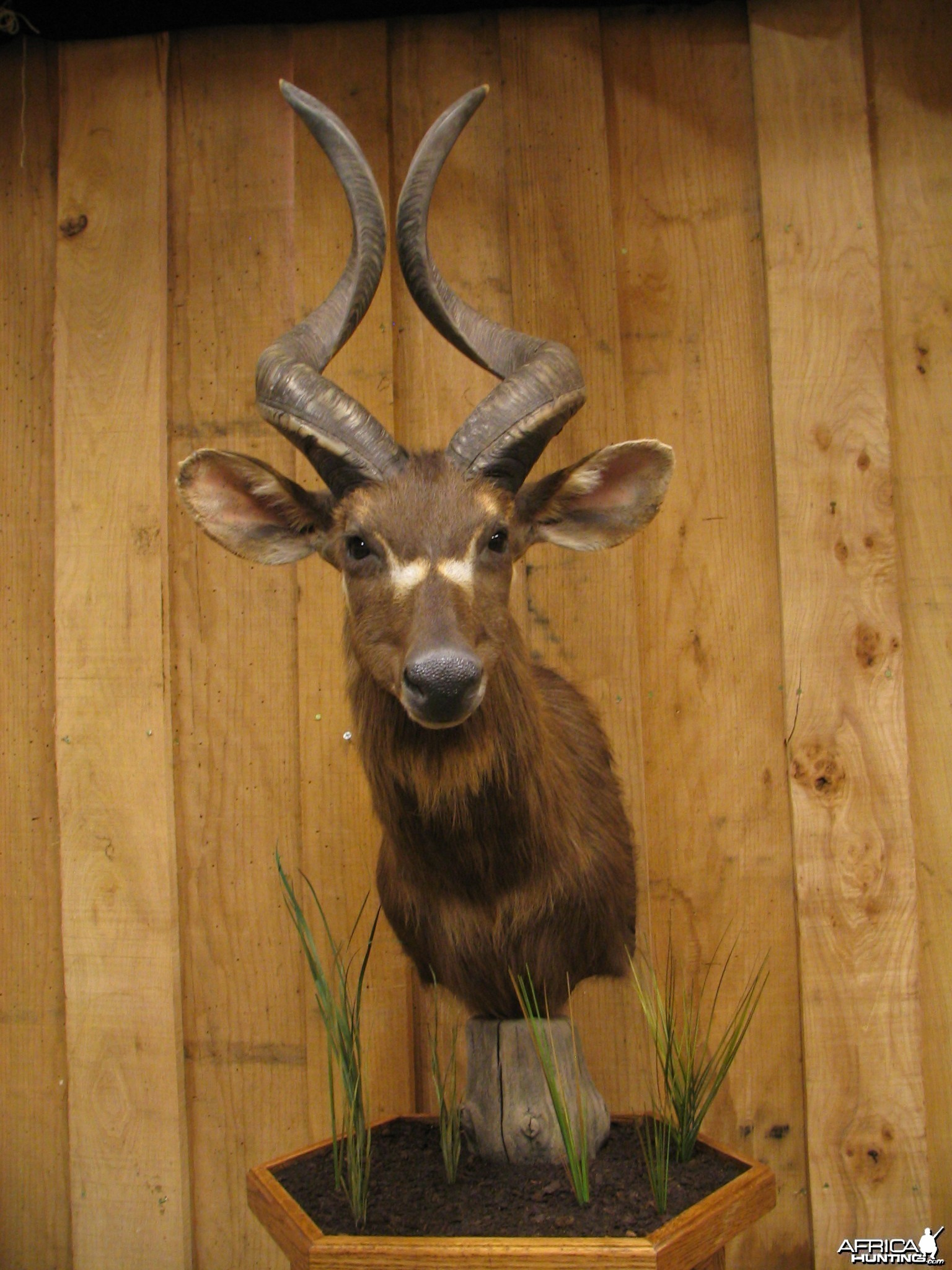 African Taxidermy