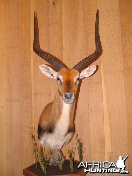African Taxidermy